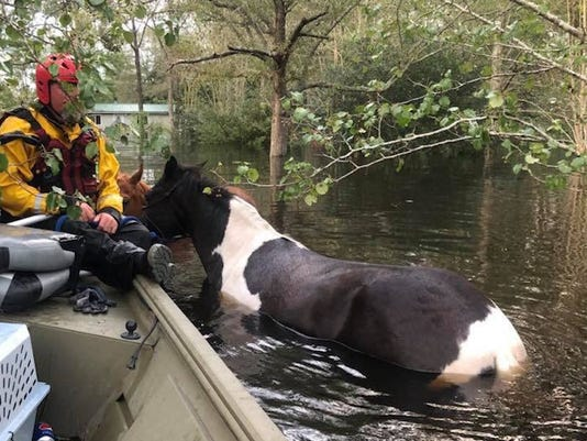 Rescuers race to save drowning horses
