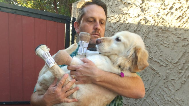In this Saturday, March 12, 2016 photo, Richard Howell carries Chi Chi, a golden retriever mix, at his home in Phoenix. The 2-year-old dog has spent two months in a veterinary clinic in Seoul learning how to live with prosthetic paws.