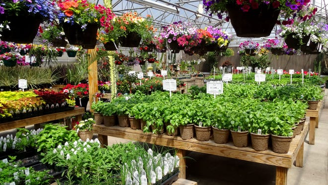 The Bath greenhouse has the largest selection of vegetable and herb starts in Northern Colorado, growing more than 40 tomato varieties, 30 pepper varieties, and many types of cucumbers, melons, squash and other crops that are suitable for the Front Range.