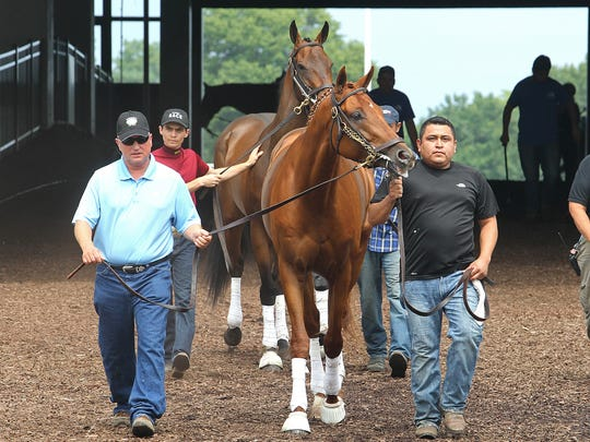 Gun Runner (center) is a major contender in the $1 million Grade I betfair.com Haskell Invitational.