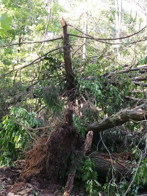 Tree damage in Enola from the May 15 tornado.
