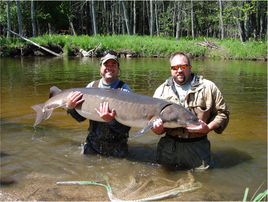 Black Lake is the DNR's most intensely managed sturgeon