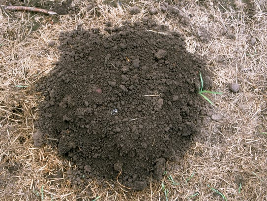 A mole mound is round.