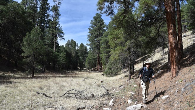 Fay Canyon in Flagstaff is a pleasant walk through woods and meadows.