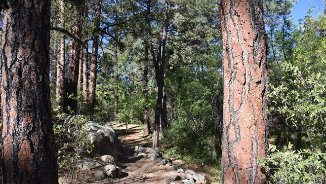 A pine-shaded passage of Butte Creek Trail in Prescott.