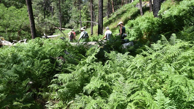 Hikers pass through fields of ferns in Pivot Rock Canyon.