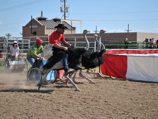 The Chandler Ostrich Festival began in 1988 and has