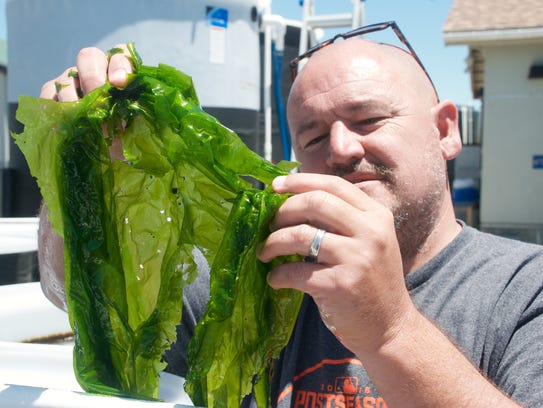 Michael Graham, founder of Monterey Bay Seaweeds, holds