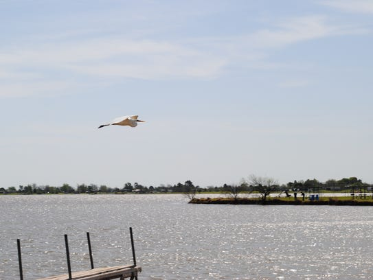 An egret flies Thursday morning over Lake Arrowhead.
