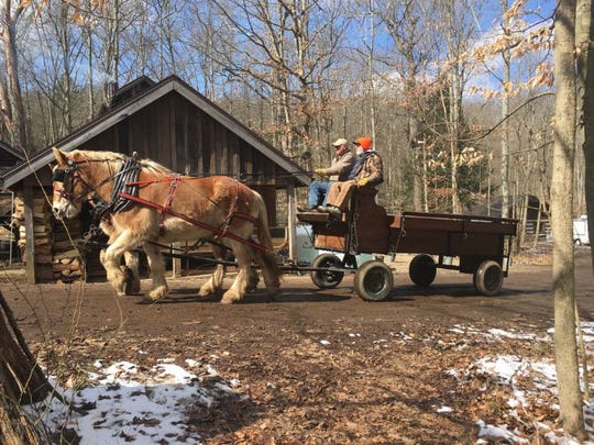 Visitors to the 2018 Malabar Farm's Maple Syrup Festival enjoy horse and wagon rides to the sugar shack.
