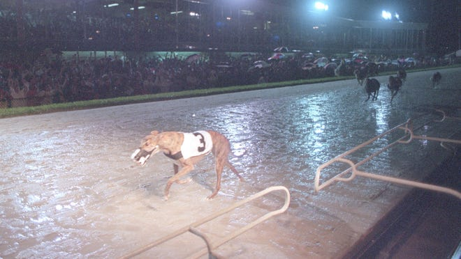 Pat C Rendezvous wins 33rd race in a row on June 4, 1994 at the Palm Beach Kennel Club to set a world record.