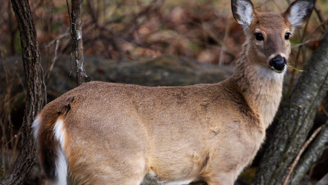 The Missouri Department of Conservation monitored deer killed by hunters for chronic wasting disease.