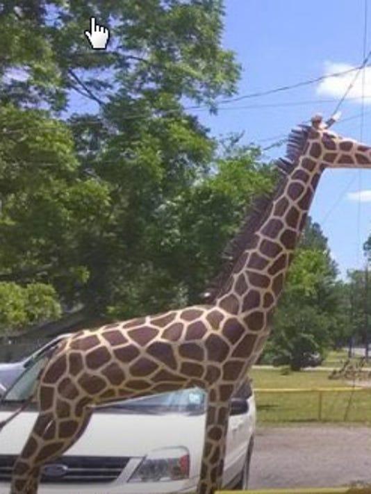 636353850481397499-giraffe.jpg