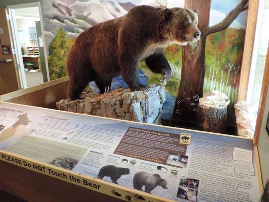 Lincoln Bear_Hert