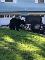 This black bear was seen outside a home on Lake Avenue