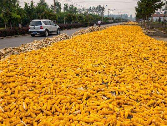 corn33.jpg