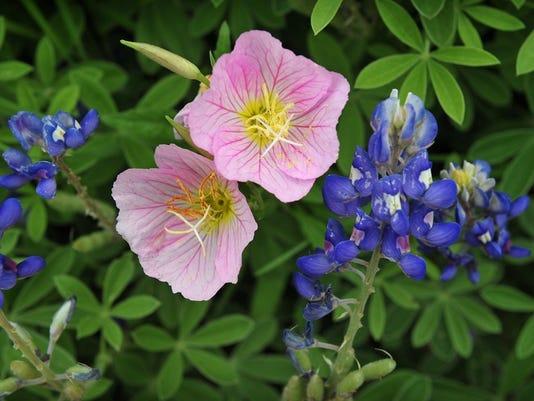 Texas highways are bloomin beautiful mightylinksfo