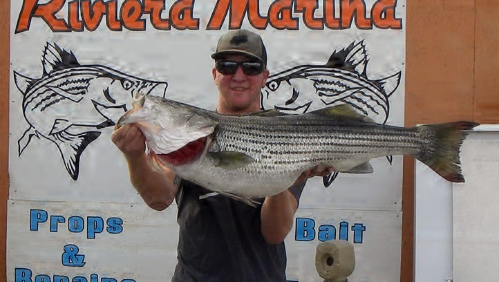 Justin Smith weighed in a 26.5-pound, 41-inch striper at Rusty's Riviera Marina. He caught the fish while casting a Glide Swimmer from the shoreline near Rotary Park.