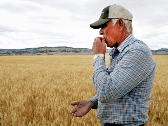 Rick Diehl chews kernels from his winter wheat fields in East Helena, Montana. Droughts are among the eight hazards considered most dangerous to the Springfield area.