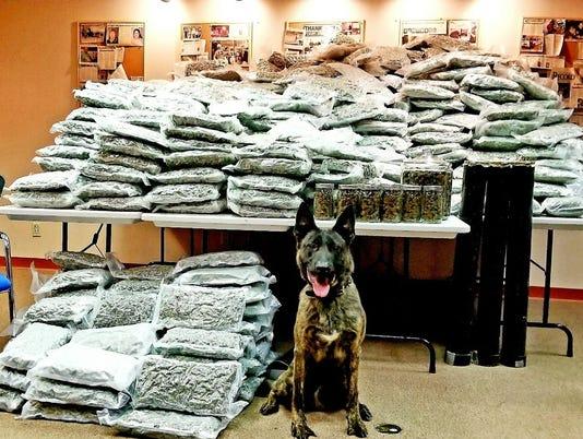 Half-ton marijuana bust