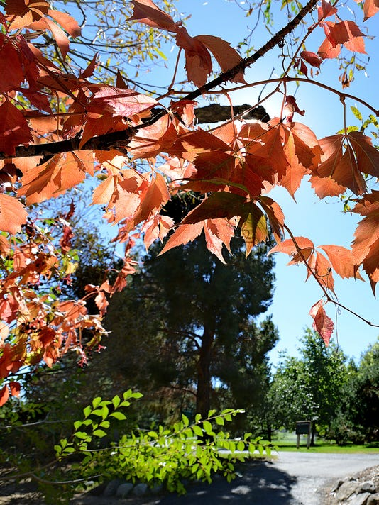 Fall colors at May Arboretum