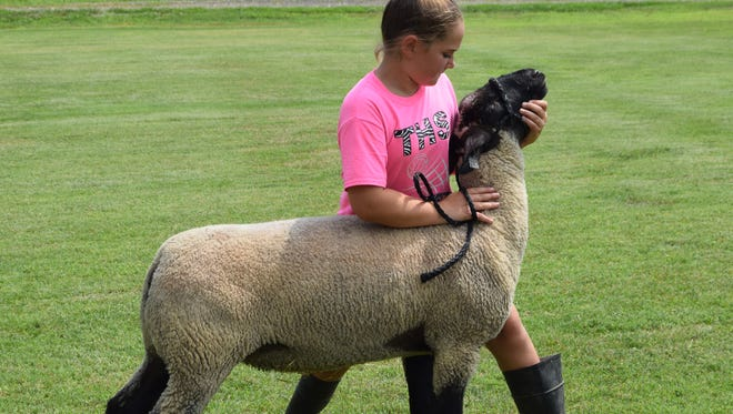 """Averye Engelhardt, 10, steadies her sheep named """"Crazy"""" because he acted wild when the family first acquired him."""