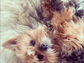 It looks like Miranda Kerr's dog Frankie has learned a thing or two about posing for the camera from the model.
