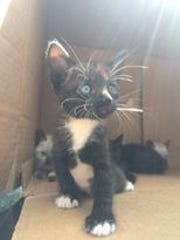 A litter of kittens was found abandoned Thursday, April