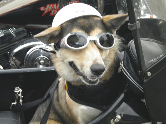 One_Happy_Biker_Dog