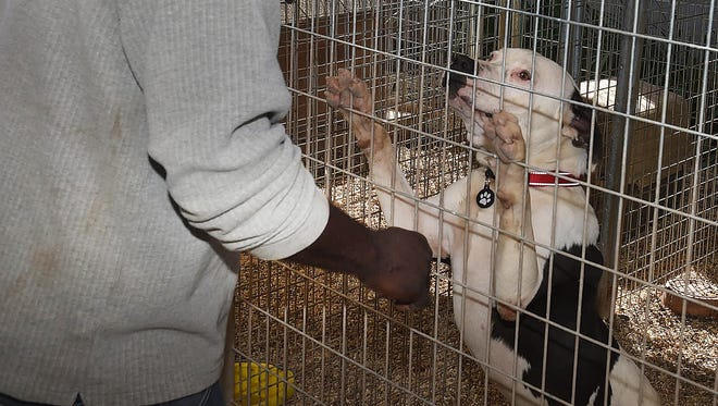 The St. Landry Parish Animal Shelter is closed until further notice after a pit bull attacked a worker at the shelter.