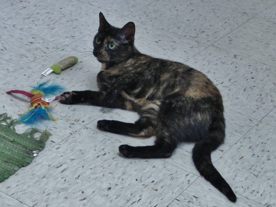 Annie is a gorgeous 2-year-old tortie girl who has