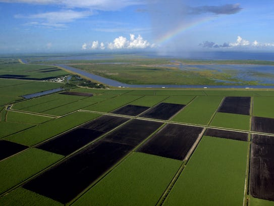 Fallow land and green sugar cane are divided into rectangular