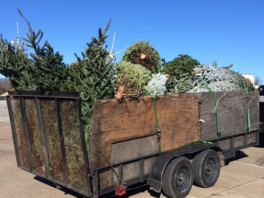 Fairview friends happy to support Elephant Sanctuary by collecting donated Christmas trees.