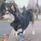 Derby the dog with his 3D printed prosthetics.