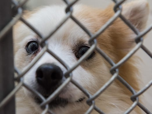One of the 300 dogs seized in Eden looks through its