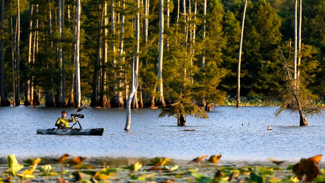 Amateur wildlife photographer Lyle Gruby  paddles his kayak through the Hatchie National Wildlife Reserve near Brownsville, Tenn. The refuge is a popular stop for bird watchers and photographers especially during the winter migration.