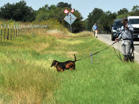 A James V. Allred Unit bloodhound searches for 76-year-old