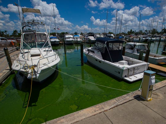 Green algae blooms were visible along the canals of the Cape Coral Yacht Club Marina on this photograph taken Wednesday July 11, 2018.