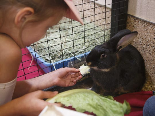 Best Friends Animal Society Kids Camp participant Mia Kabella feeds a rabbit in Kanab.