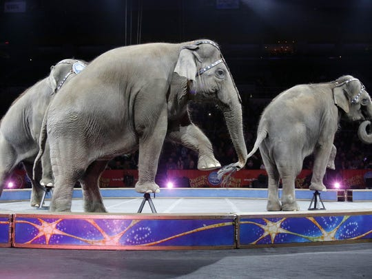 """FILE - In this May 1, 2016 file photo, Asian elephants perform for the final time in the Ringling Bros. and Barnum & Bailey Circus in Providence, R.I. The Ringling Bros. and Barnum & Bailey Circus will end """"The Greatest Show on Earth"""" in May 2017, following a 146-year run. Declining attendance combined with high operating costs, along with changing public tastes and prolonged battles with animal rights groups all contributed to its demise. (AP Photo/Bill Sikes, File)"""