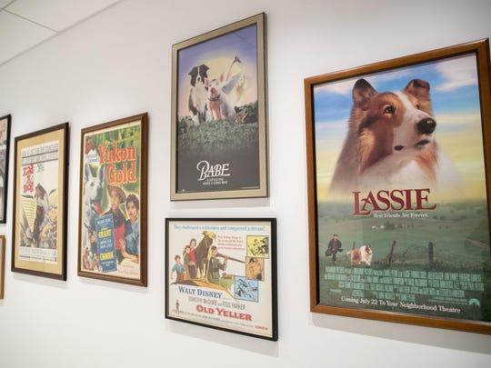 Dog Museum (2)