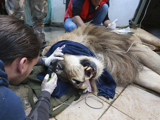 Veterinarian Marc Goelkel of the international animal