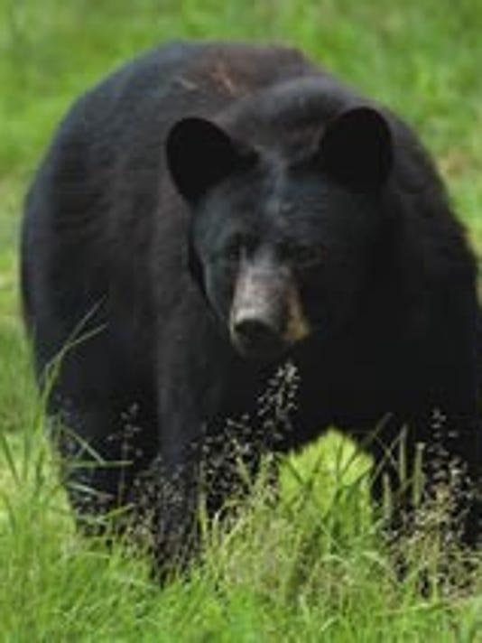 636405088526989380-black-bear.jpg