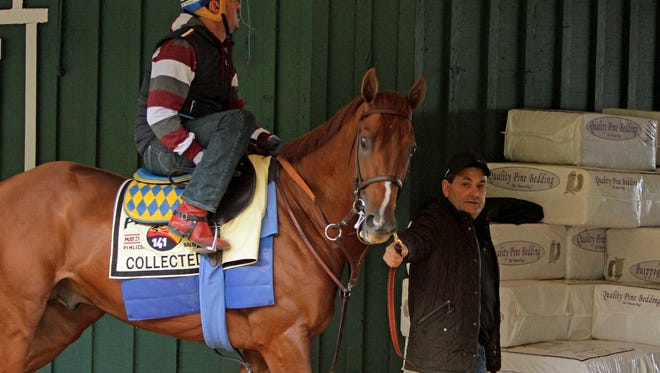 Preakness Stakes hopeful Collected is led to the track for a morning jog by assistant trainer Jimmy Barnes at Pimlico Race Course Wednesday, May 18, 2016, in Baltimore. Exercise rider George Alvarez is in the saddle. The 141st Preakness Stakes is scheduled for Saturday, May 21. (AP Photo/Garry Jones)