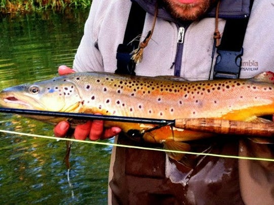 A male brown trout caught in the driftless area