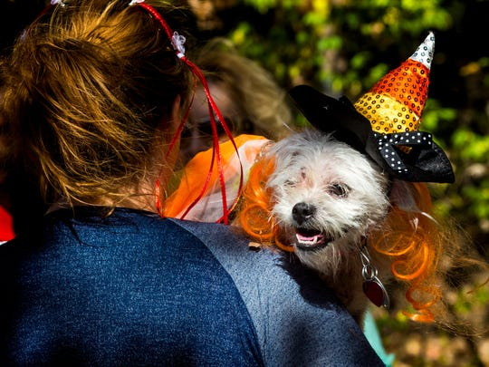 """Keri Grove, of Goshen, holds Elsa, who is dressed like a candy corn witch for KennelResorts' Howloween Hound Haunt """"Costume Parade"""" in Milford Saturday, October 29, 2016."""