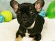 Photo of stolen puppy