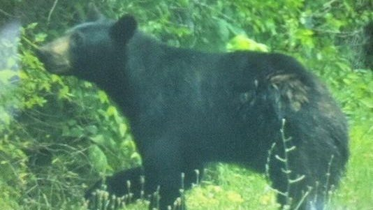 Union Township police have closed a park because the bear was spotted there and it is drawing a crowd.