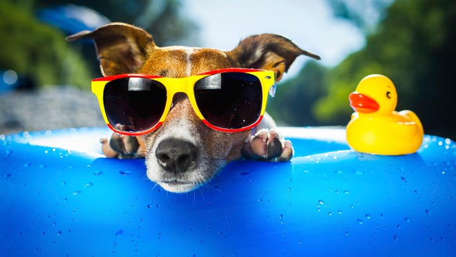 Keep pets cool in the summer.