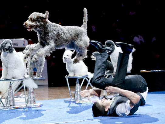 The Olate Dogs perform at halftime of a game between